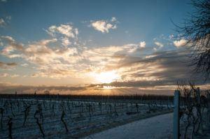 Naturfotografie Rheinland Pfalz Winter - Michael Brückner
