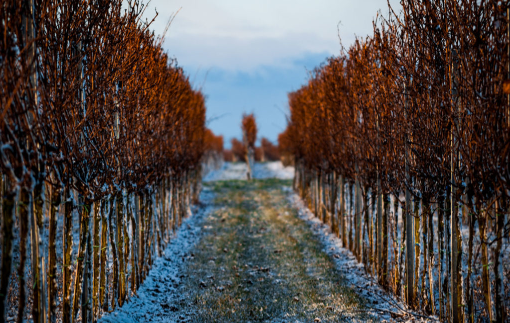 Südpfalz im Winter