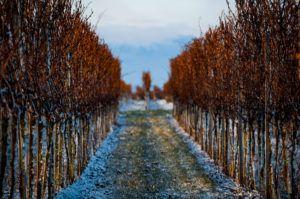 Naturfotografie Rheinland Pfalz Weingarten Winter - Michael Brückner